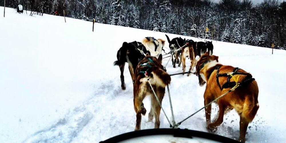 dogsledding by @jason_slayton