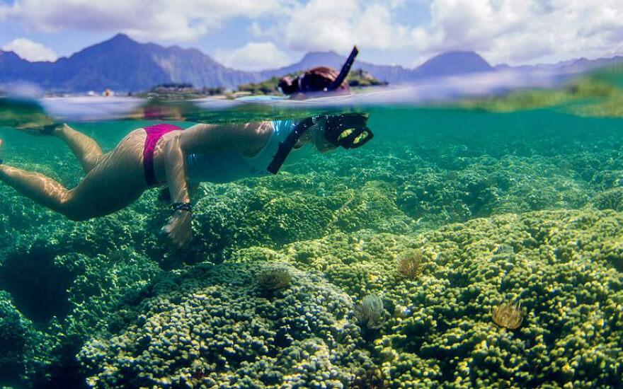 Top oahu snorkeling tours hijinks for Plenty of fish oahu