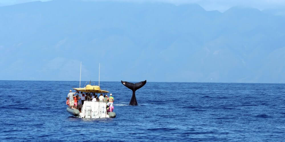 whale watching oahu