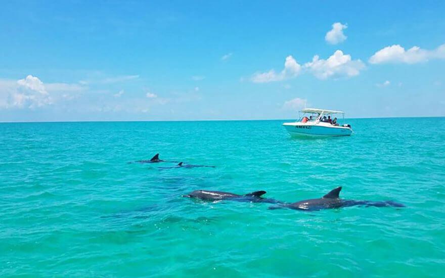 dolphin safari key west