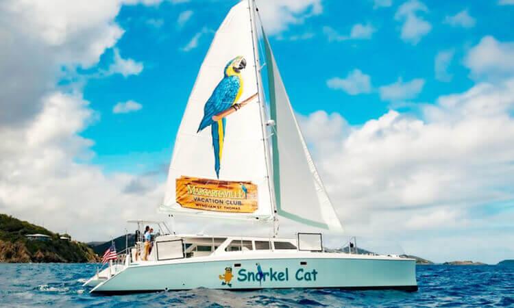 Snorkel Cat Adventure